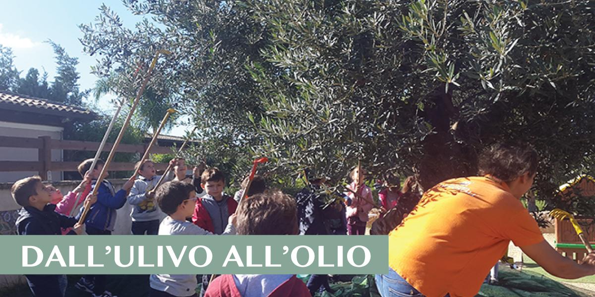 slide-HOME-la-didattica-2019-ulivo-olio